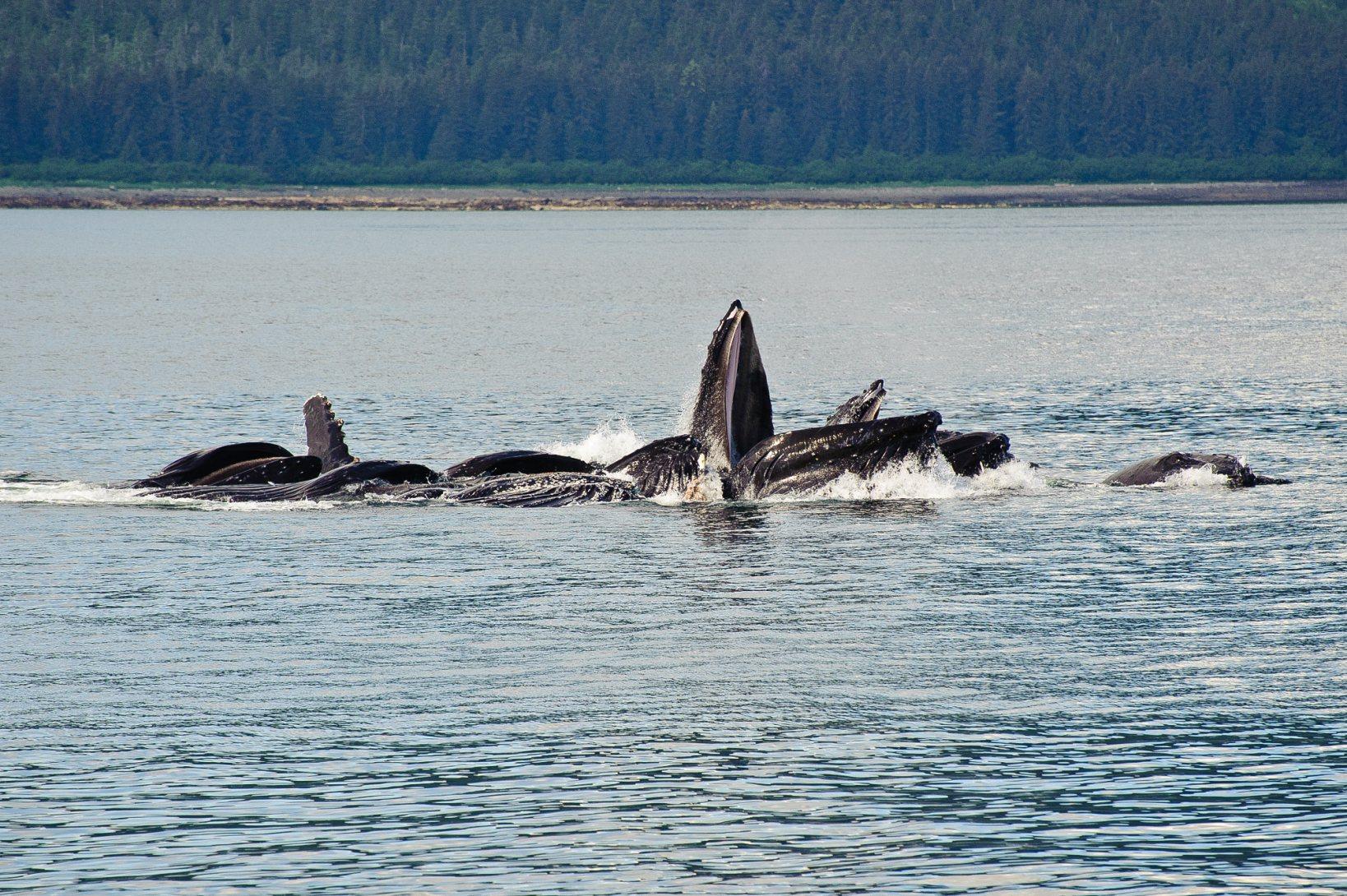166_Alaska-2010-166.jpg